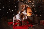 Dog Jack Russell Terrier And Dog Nova Scotia Duck Tolling Retriever . Happy New Year, Christmas poster