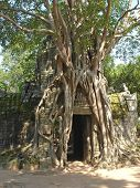 stock photo of mahabharata  - Banyan tree covering entirely an old khmer pyramid temple  - JPG