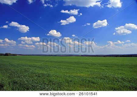 Green field and blue sky. Background