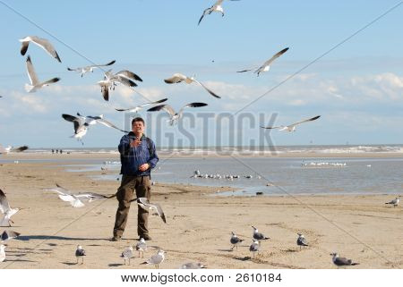 Feeding The Seagulls