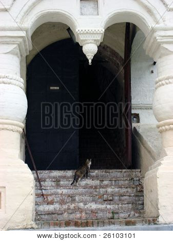 Russia, Rostov the Great. Curios cat near the church entrance