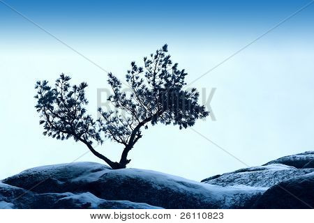 alone tree stand over blue sky on stone