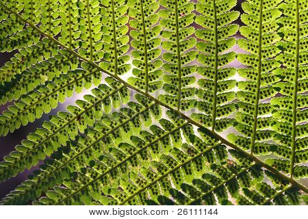 Fern Abstract Pattern