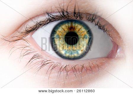 macro human beauty eye