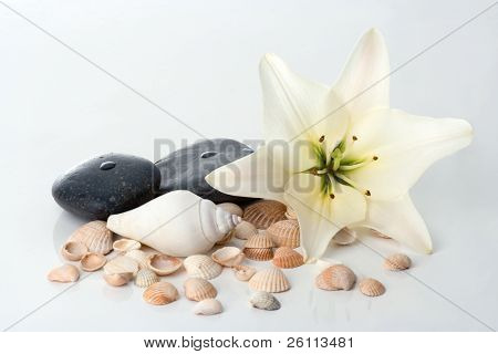 madonna lily spa stones and sea shell on white