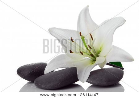madonna lily and spa stone on white