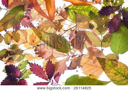 Backround vom fallen herbst laub vielen Farben