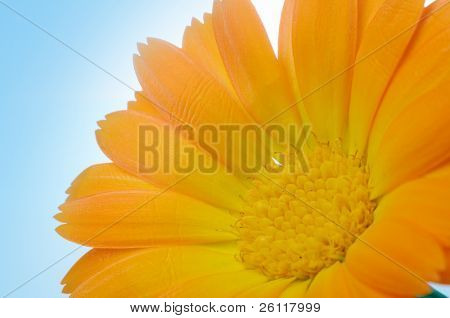 yellow flower under blue sky