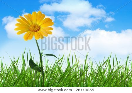 orange  flower in grass  under blue sky with clouds