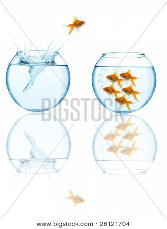 goldfish leaping in aquarium on white background