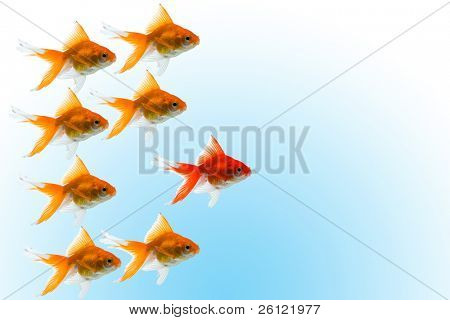 goldfishes with leader on blue