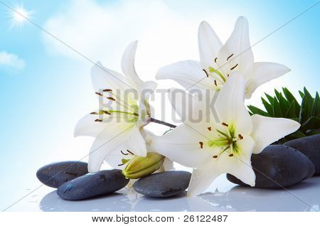 madonna lily on sky with sun and clouds background