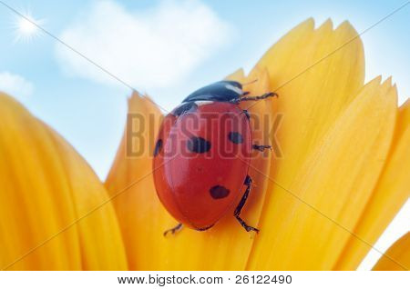 yellow flower petal with ladybug under blue sky