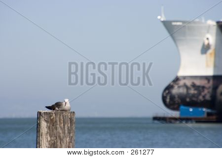 Bird And Ship.