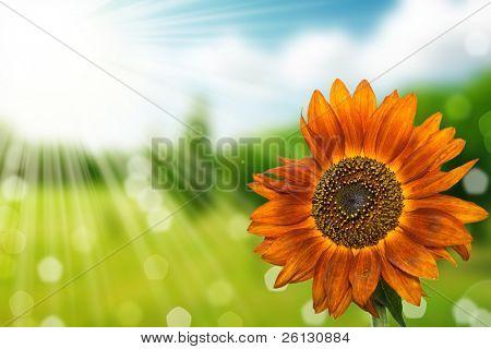 Blume und Natur Frühling Hintergrund Bokeh mit Sonne Strahl