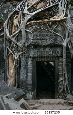 Tha Prohm, Angkor, Cambodia