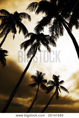 palmtrees at sunset sky background