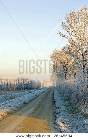 Hoarfrost covered trees surrounding the rural orchards on a beautiful winter morning. A small hare crossing the road, heading towards the sunlight.