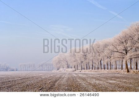 An almost archetypal image of Zeeland, the Netherlands: a freshly ploughed field in the polder, surrounded by dykes and trees, covered in frost and a faint haze on a cold winter morning