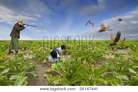 Hunting scene with a single shooter, aiming at four pheasants flying away whilst two spaniels are attentively waiting