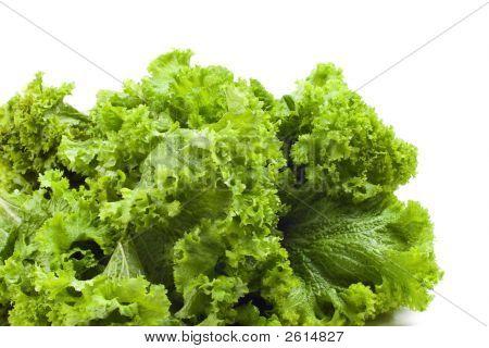Curly Mustard Greens