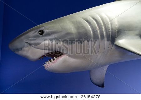 Great Shark