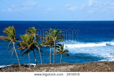 Palm Trees With Rough Surf