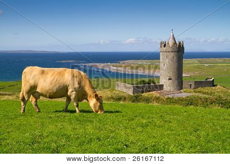 Doonagore castle with Irish cows