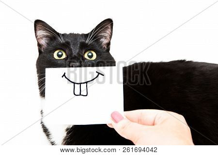 poster of Black And White Cat On White Background. Smile Drawing On White Sticker For Cat. Hand Holding Paper.