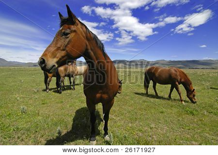 View of horses with white and gray storm clouds in blue sky