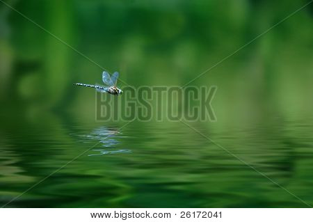 Reflection of dragonfly hovering over lake water