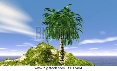 The Coconut Palm
