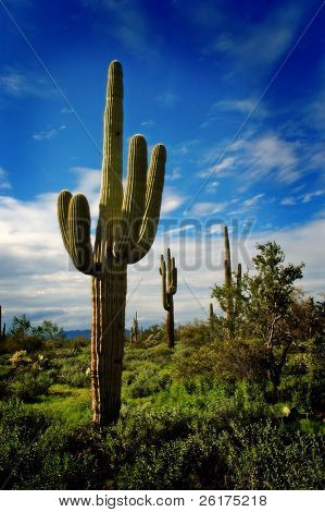 Saguaro Cactus in Arizona met sky en Clouds