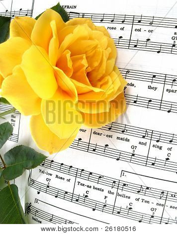 Una rosa amarilla sobre la música Yellow Rose of Texas