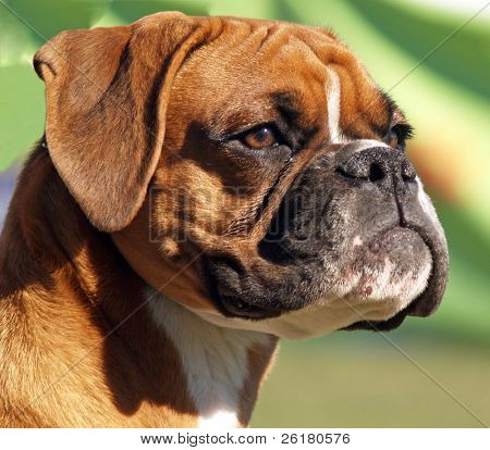 A Portrait shot of a boxer