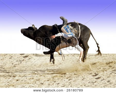 A bull rider about to hit the dust