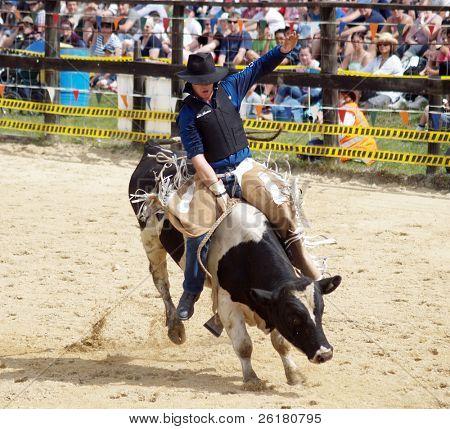 Bull Rider on Fresian Bull