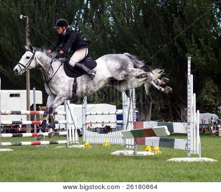 A grey show jumper knocks a plank off the jump