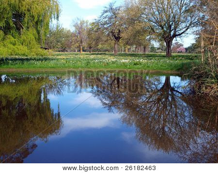Reflection of Trees and Sky in a small lake