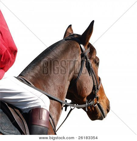 Horse with rider isolated with clipping path