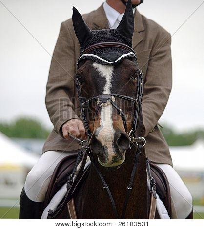 Horse head On