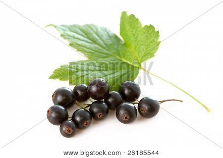 black currant with green leaves isolated on white background