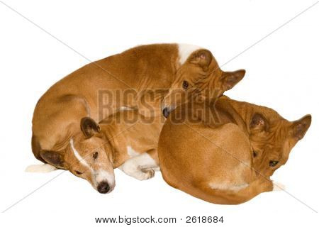 Sleeping Pack Dogs