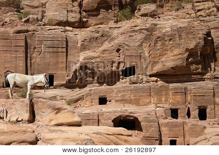 A donkey waiting for customers near some of the rock-cut tombs at Petra, Jordan