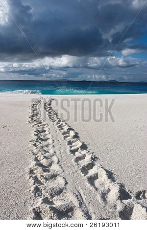 Track of an endangered Hawksbill Turtle disappearing into the sea under a lowering sky. Taken on Fregate Island resort, Seychelles, looking towards other islands in the group.