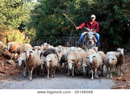 A Greek shepherd and his donkey moving his flock through the Cretan mountains (summer 2007).
