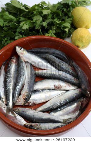 Sardinas (sardinas) en un cuenco rústico con la cabeza y tripas quitados y limón y perejil bes