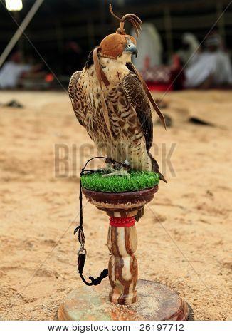 ein Falke sitzt auf seinem Stand auf einem Wüstencamp in Katar, Arabien, während (außerhalb des Fokus) Araber im Golf rauben