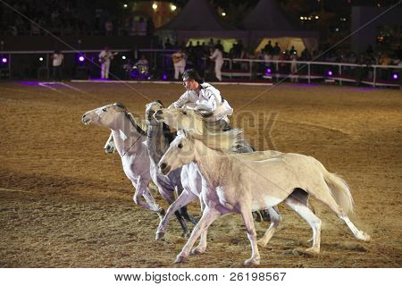 QATAR, DOHA - MARCH 23. French showman Jean-Francois Pignon controls five horses during the finale of the first Qatar Egyptian Arabian Horse Show on March 23, 2010 in Qatar, DOHA