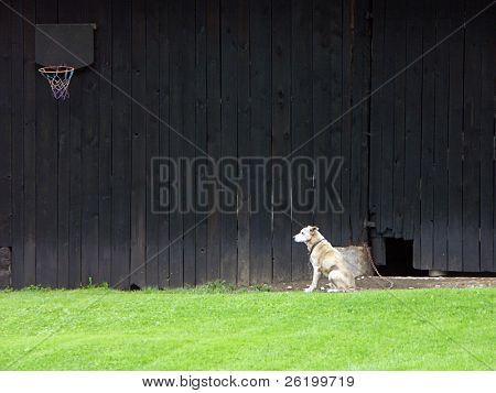 Watchdog 0811_35